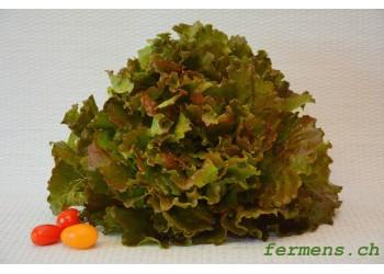 Salade batavia canasta