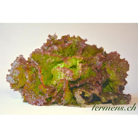 Salade batavia grenobloise