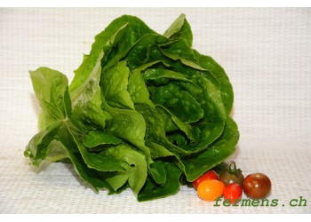 Salade laitue romaine
