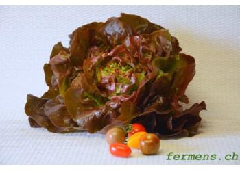 Salade pommée rouge