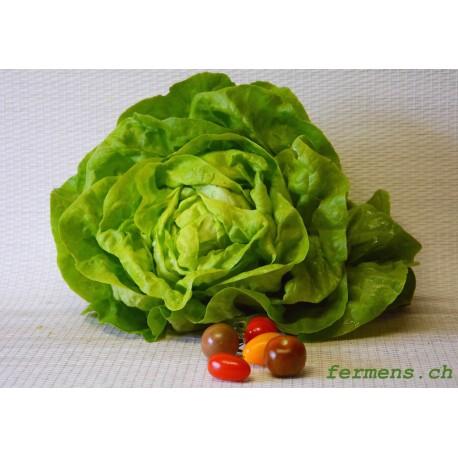 Salade pommée verte