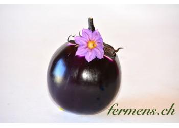 aubergine ronde de valence
