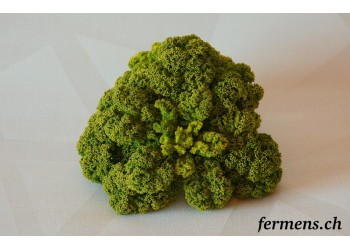 Chou Kale vert frisé
