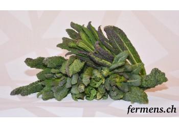 Chou kale vert nero di Toscana