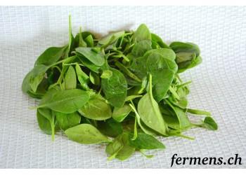Epinard salade