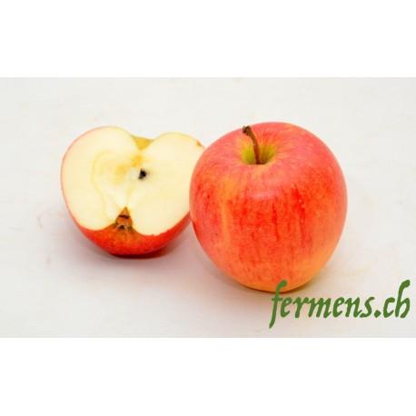 Pomme Galant