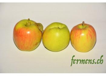 Pomme Decorf