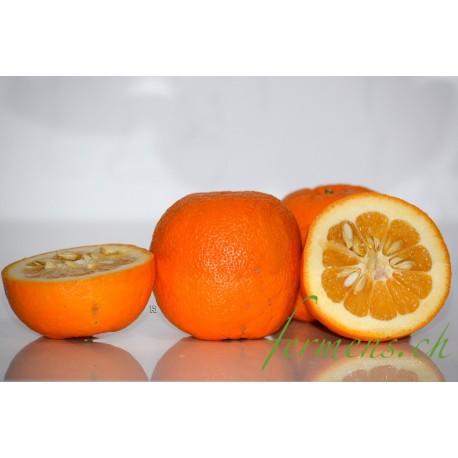 Orange Améres
