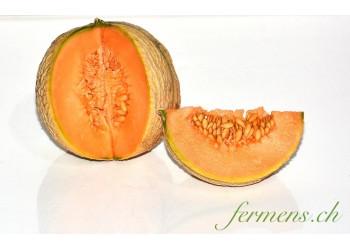 Melon charantais