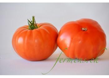 Tomates Babouchka