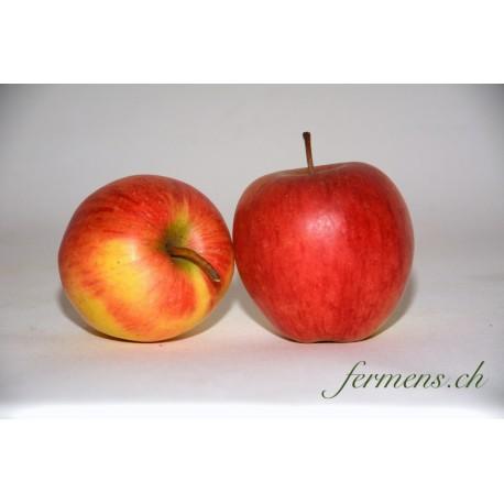 Pomme Rubinola