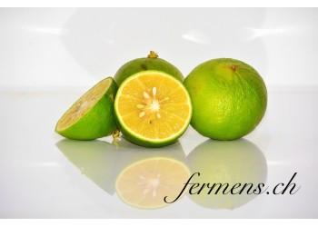 Citrons Bergamotte