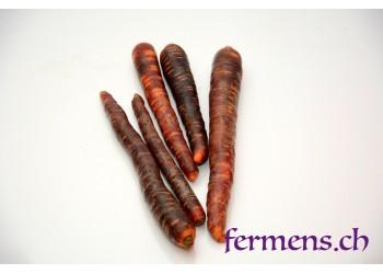 carottes violet