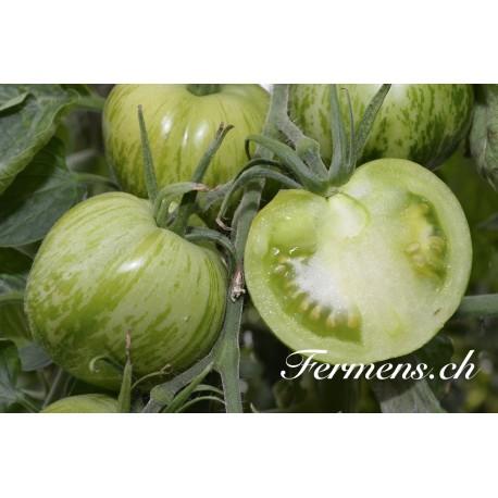 tomates vertes (confiture)