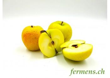 Pomme Goldrusch